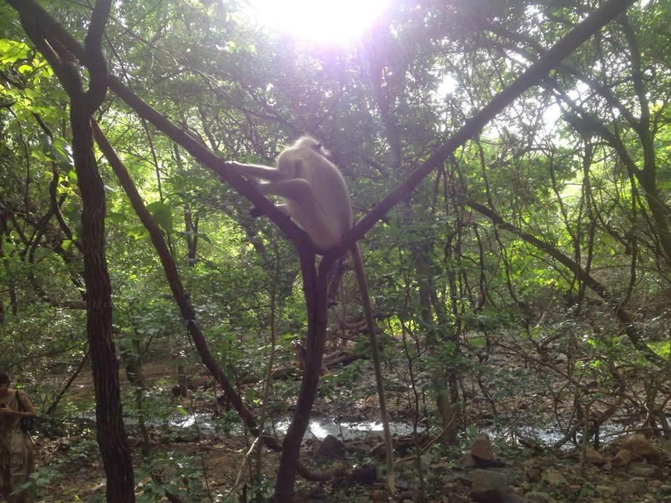 wonderful image of monkey