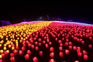 20 Thousand Glowing Flowers in Bohol - Jardin Necitas | Tipid Biyahe