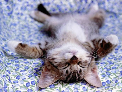 anak kucing tidur terlentang