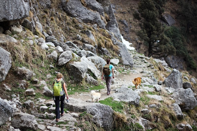 Hiking trail to Triund, Dharamsala