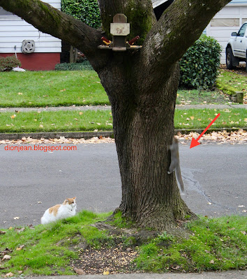 White cat hunting squirrels