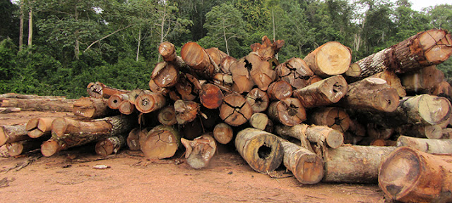 Tropical forests overexploited by unsustainable logging