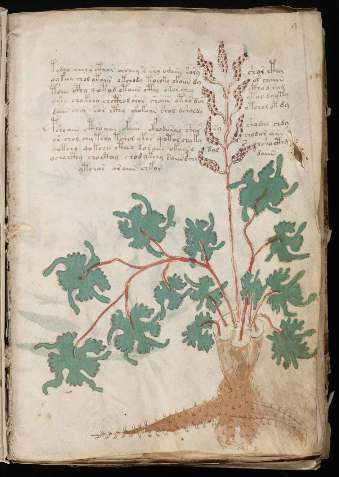 manuscrito019