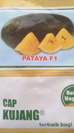 buah keras,tahan simpan,tahan pecah, daging kuning, tahan angkut, cepat panen,rasa manis,murah,inul, Gratis Pataya, Diamond Seed, Cap Kujang