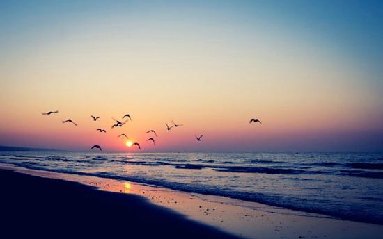 nascer do sol na praia com pássaros voando