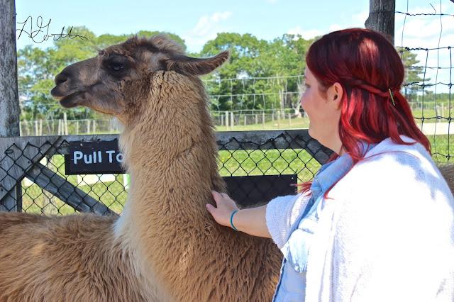petting a llama