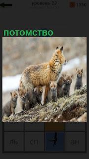 1100 слов гуляет потомство лисы на 27 уровне