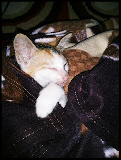 Kucing Saya Hilang, Sedih Luar Biasa