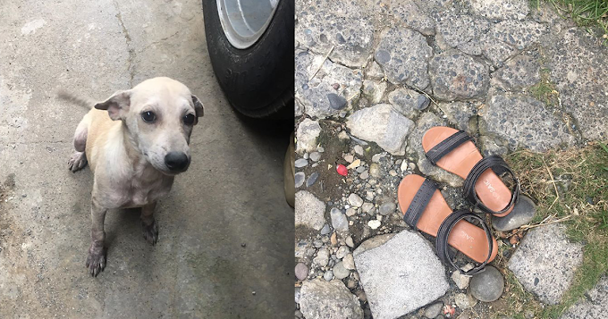 Hilarious dog posted by his owner after he stole neighbor's sandals just for fun | City Servants