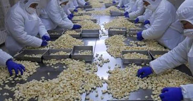 usturoiul important din China este foarte nociv