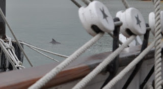 dolphin fin seen through the rigging of the sailing ship