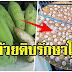 กล้วยดิบ ตากแห้ง บดเป็นผง ช่วยลดไขมัน แก้แผลในกระเพาะและกรดไหลย้อน