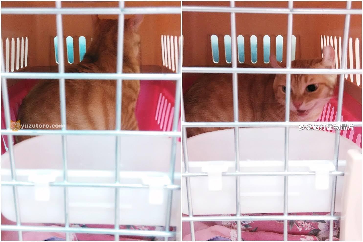 【肉球記事】給多樂貓施打三合一疫苗。外加寵物登記、植入晶片