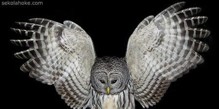 a picture of owl
