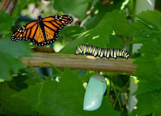 Debemos de seguir cambiando, tal como la oruga a la mariposa. Y debe ser constante.