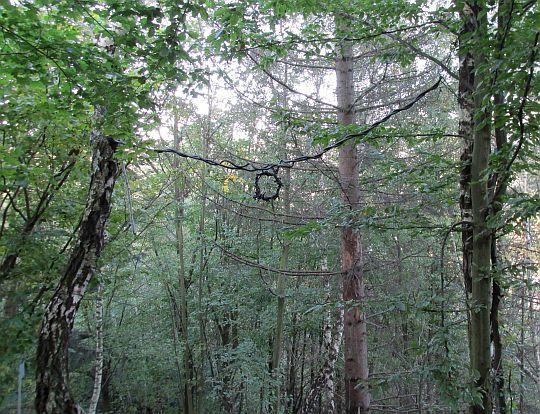 Korona cierniowa zawieszona między drzewami.