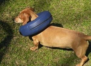 colar para cães