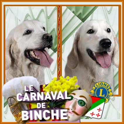 golden retriever, louisette, carnaval binche, lions club,