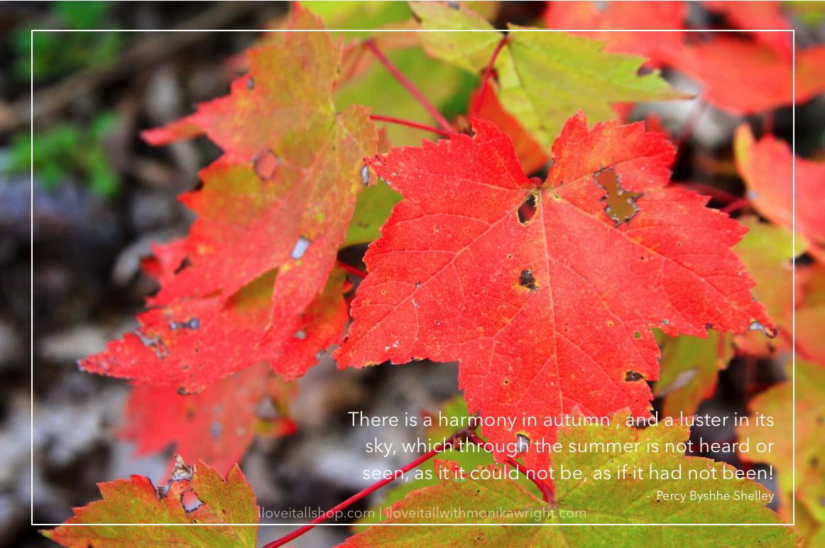 #harmony #fall #autumn #sunday photos #nature #leaves