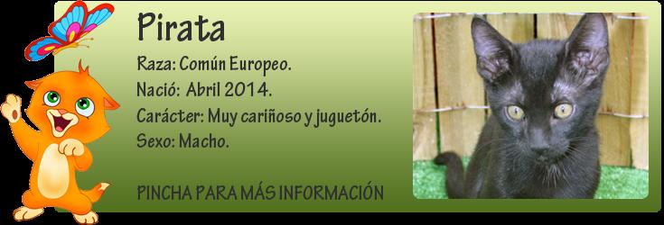 http://almaexoticos.blogspot.com.es/2014/05/pirata-cachorrito-genial-en-adopcion.html