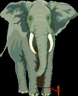 elephant motivational story