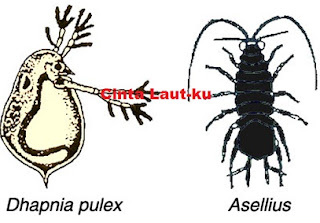 belajar crustacea udang, lobster, kepiting
