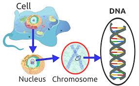 3 Tahapan Replikasi DNA