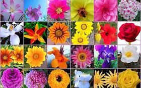 Contoh Soal Psikotes 6 135 Nama Nama Bunga Dan Macam Macam Bunga Di Dunia Lengkap