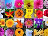 135+ Nama-Nama Bunga dan Macam-Macam Bunga di Dunia [Lengkap]