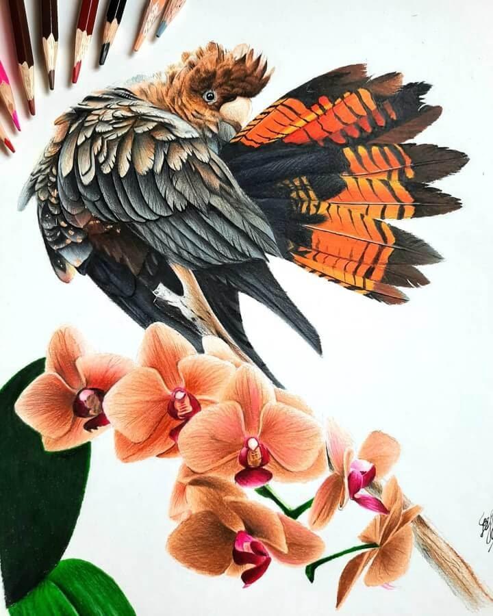 12-Bele-Birds-Drawings-www-designstack-co