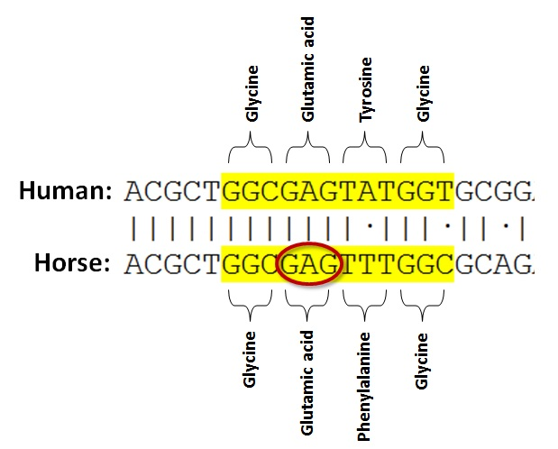 what do the letters dna stand for dna strand with 25510