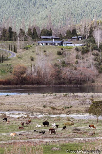 Cattle on the bank of the Tukituki River  behind Te Mata Peak, Havelock North, with free access to the river. photograph