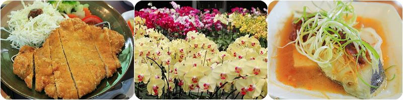 台南親子景點|蘭科植物園|珍奇蘭種保育區~值得探訪的優勝美地