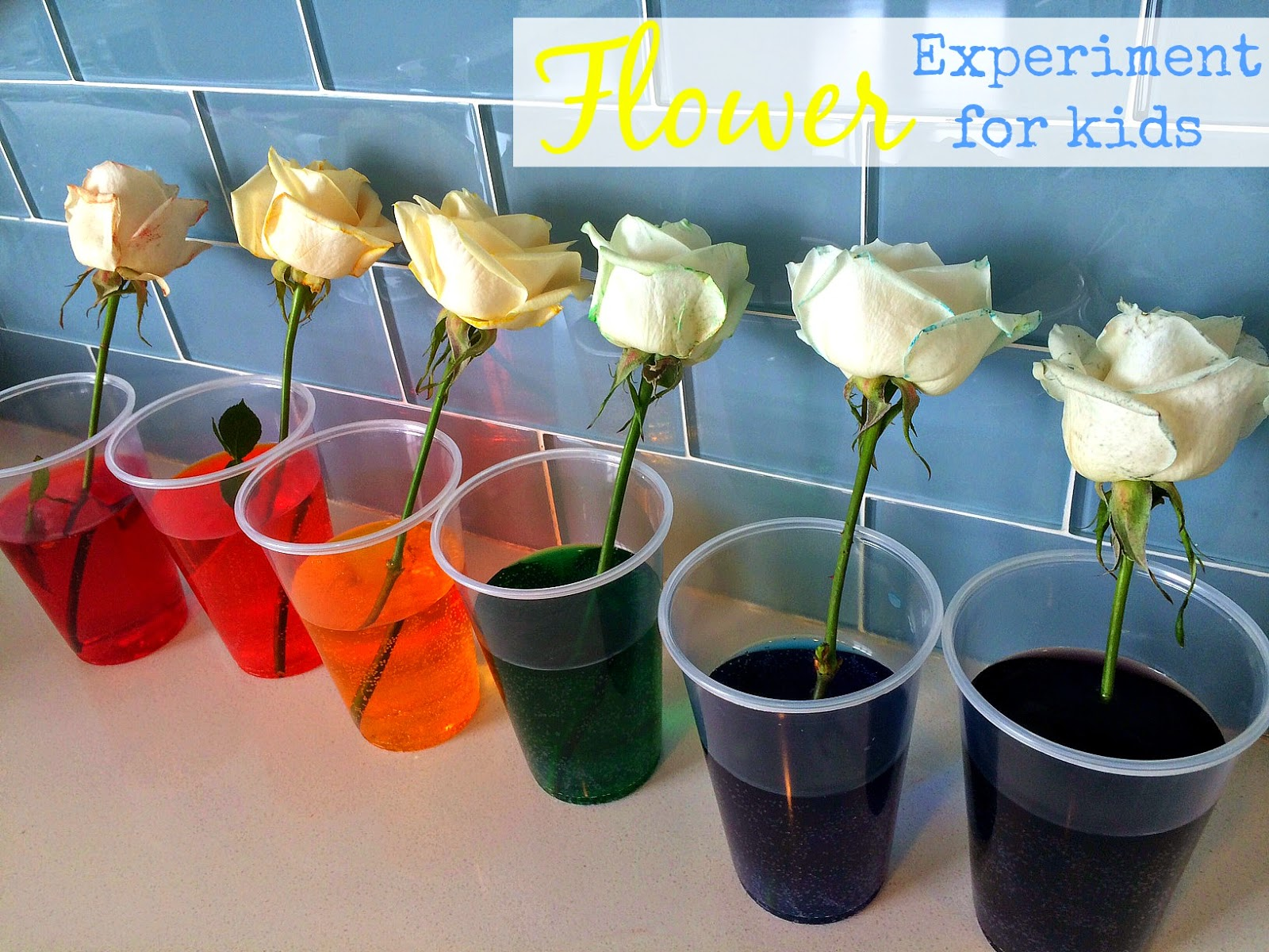 Color Changing Flower Experiment Graphs | Gardening: Flower and ...