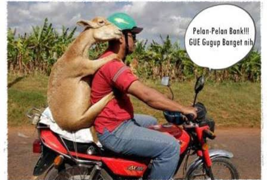 Meme lucu hewan sebelum kurban