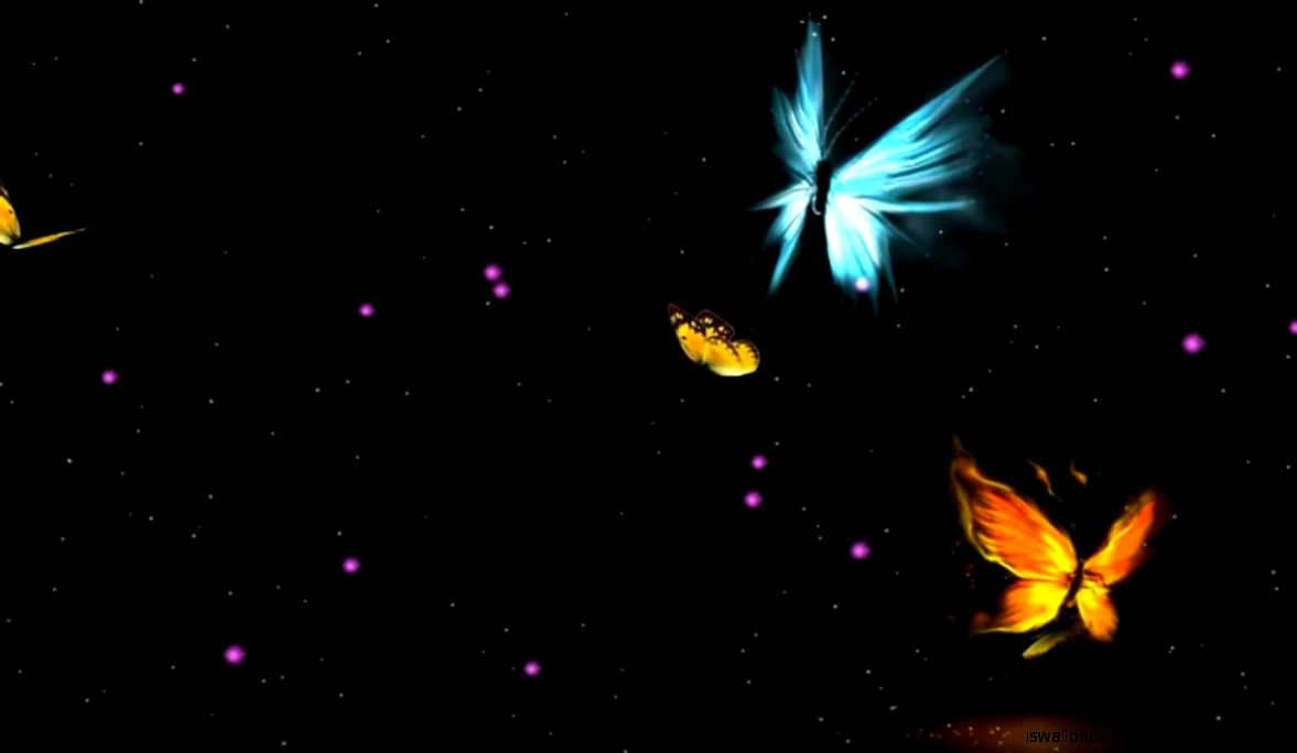 Animated Wallpaper Butterfly   Wallpapers Collection