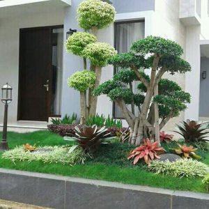 Penjual pohon bonsai beringin korea