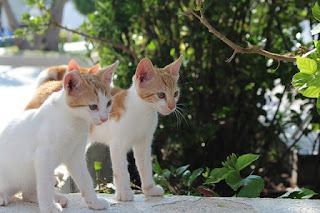 Two orange and white kittens standing outside by a tree.