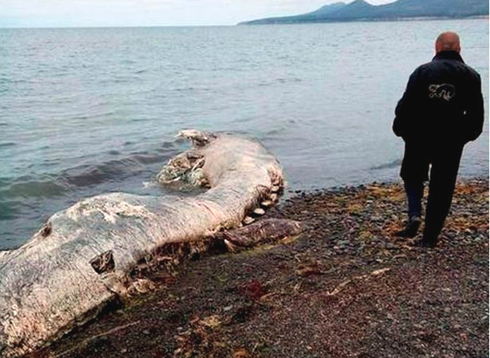 PARANORMAL EVIDENCE CAUGHT ON CAMERA: SEA MONSTERS CAUGHT ... Real Sightings Of Monsters
