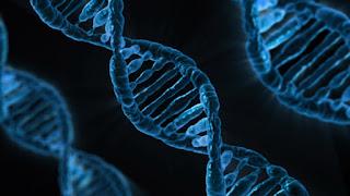 мутации в генах