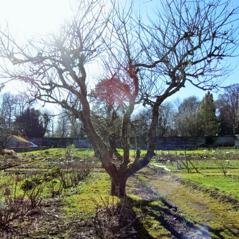 Trees in the walled garden