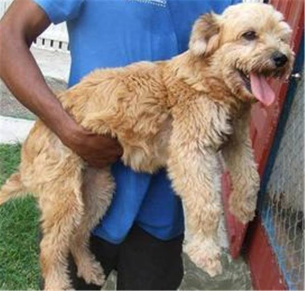 Chùm ảnh trước và sau khi chó hoang được nhận nuôi
