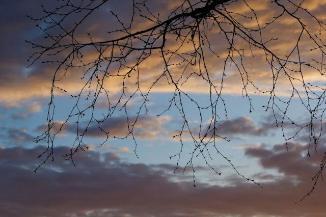 Еще чуть-чуть апрельских фоток - наталия пономарева новодвинск p_i_r_a_n_y_a Дневник моих плаваний
