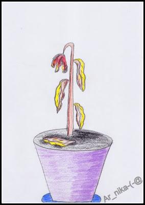 Dbamy o rośliny doniczkowe