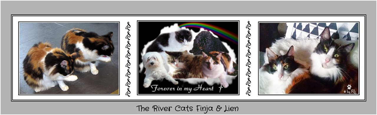 ♥ The River Cats Finja & Lien ♥