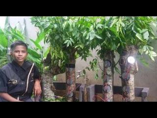 pohon kedondong