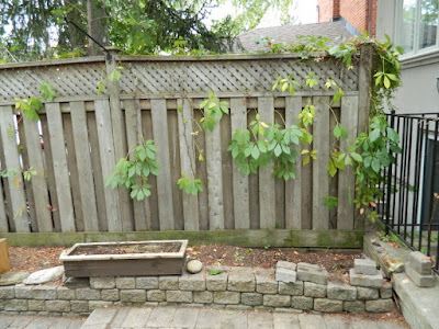 Toronto Fall Cleanup Bedford Park Backyard Garden after by Paul Jung Gardening Services