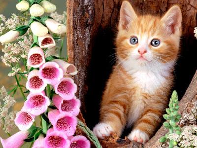 Cute Cats Kitty Pets 06