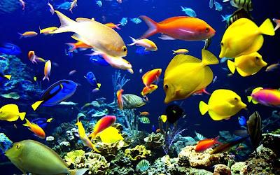 Aquarium Fish HD desktop wallpaper