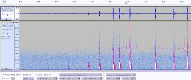 Bat detecor pipistrelle echolocation social call ultrasonic